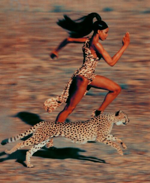 leopard ok