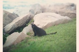 black_cat_miami_beach_welovefur