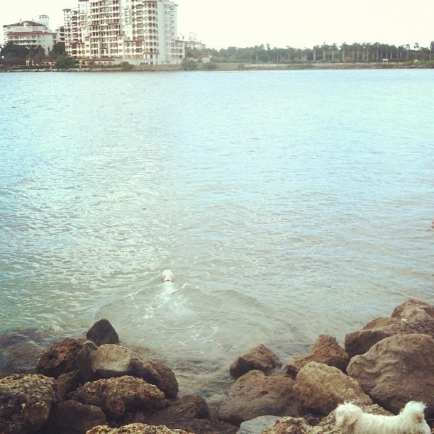 dog_swimming_in_ocean