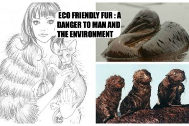ECO FRIENDLY FUR A DANGER TO MAN AND THE ENVIRONMENT 4 Ottobre 2012
