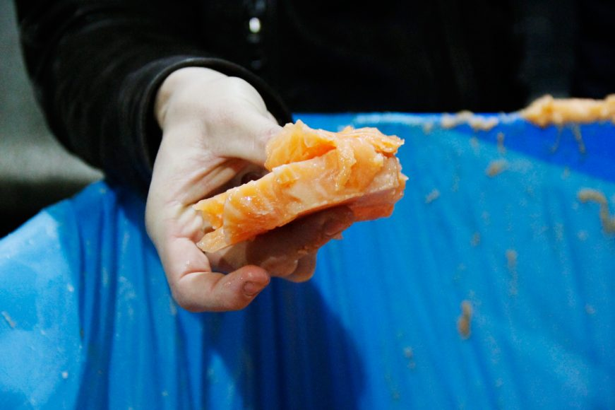 fresh salmon mink farm