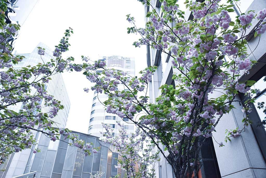 shanghai_fashionweek_2015-2468
