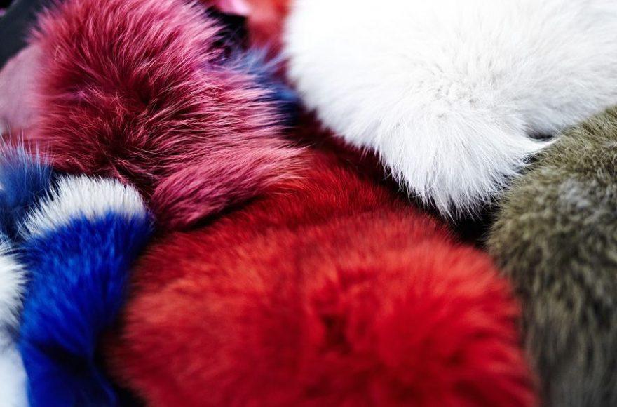 forx fur saga furs