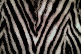 vladimiro gioia fur sample