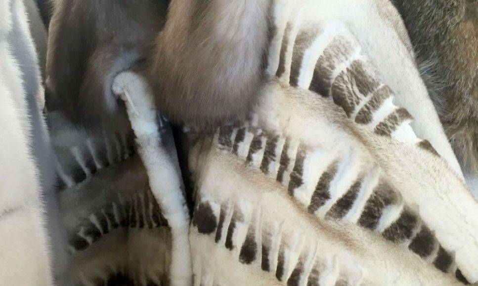 Laser etching in fur