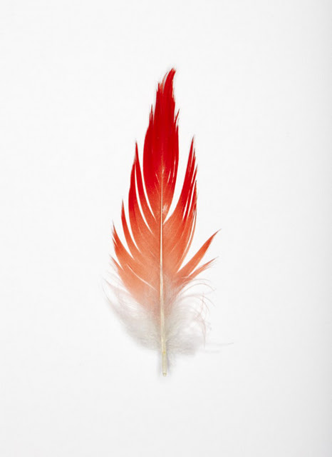 white red feather