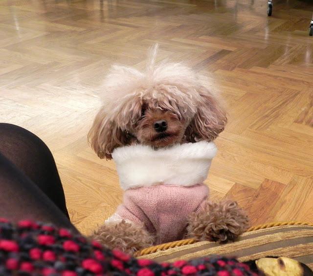 Emilie dog with pink fur vest